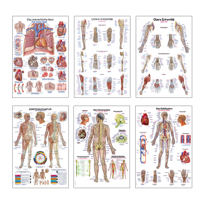 Lehrtafeln / Anatomische Modelle | Praxis-Partner.de